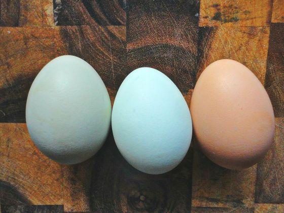 BeFunky_eggs2hf.jpg